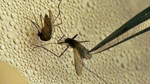 Toronto Public Health said people should take precautions against mosquito bites to guard against West Nile Virus.