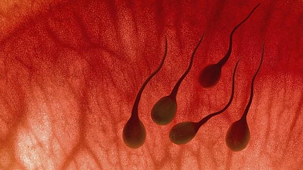 krasnie-sgustki-v-sperme