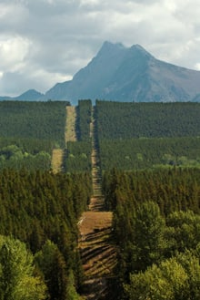 A 12-metre swath cut through the forest defines the border between Canada and the U.S. north of Polebridge, Mont.
