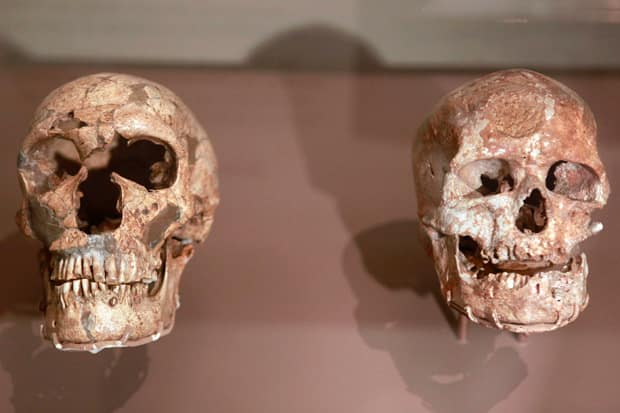 Are+neanderthals+and+humans+related
