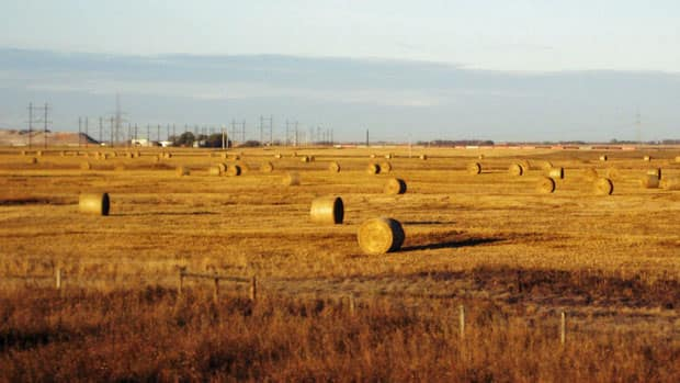 The CWB says it will challenge federal Bill C-18 that would make sales through the wheat board voluntary.