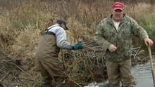 Trappers have been hired by a group of more than 60 farmers to destroy beaver dams and kill beavers that are destorying farmland south of Ottawa.