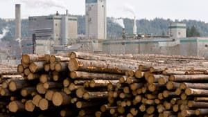 Logs are piled up at West Fraser Timber in Quesnel, B.C.