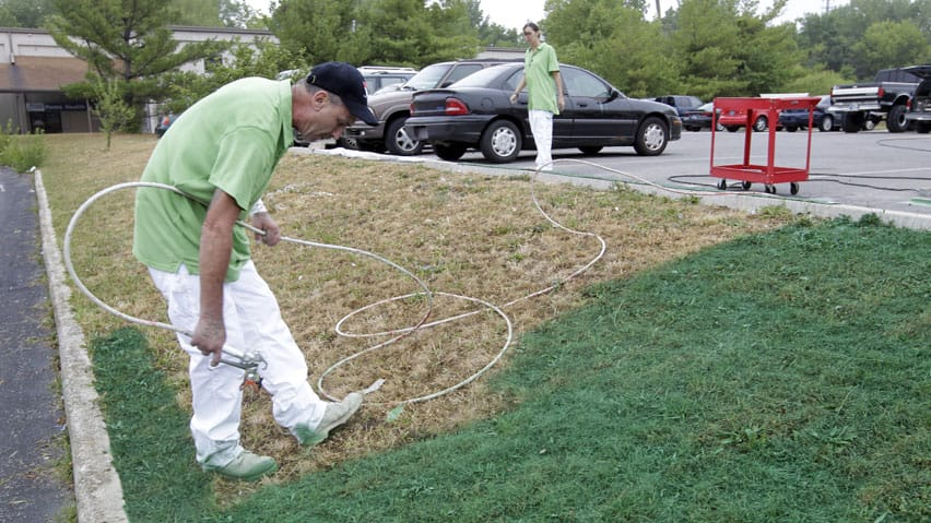 Ronnie Sharp, left, and Brandy Birdwell of Imperial Painting, spray turf paint on a drought ravished lawn outside a auto repair shop in Indianapolis. Without cutting the colour will last four to six months.