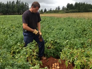 Jason Webster says he hopes the recent rain can save his potato crop.