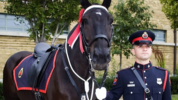 Trooper and officer Preston Gabriele placed first in the uniform division of the North American Police Equestrian Championship last year. Arthritis has forced Trooper to retire from the police force, but he has a new job with the Equestrian Association for the Disabled. (Hamilton Police Service)