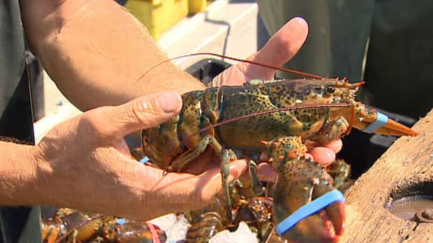 Canada exported $1 billion worth of lobster in 2012.