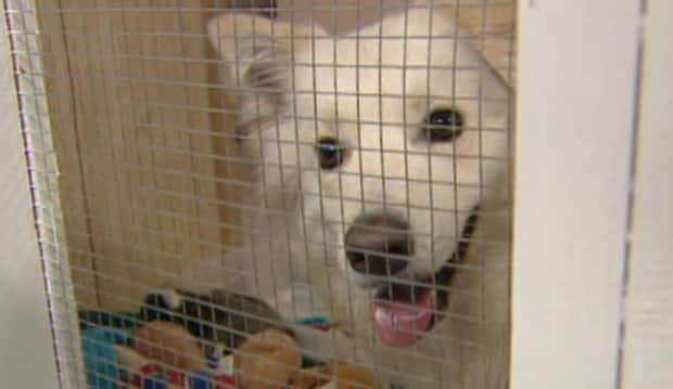 The SPCA in Happy Valley-Goose Bay is under quarantine because of a canine parvo-virus outbreak.