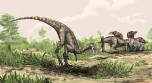 The Nysasaurus parringtoni, which stood upright, measured two to three metres from head to tail and weighed between 20 to 60 kilograms. It would have lived during the Middle Triassic period, about 245 million years ago.