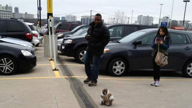 Darwin made international headlines after the monkey was seen and photographed in the parking lot of an Ikea store in Toronto on Dec. 9, and then placed in an Ontario animal sanctuary. His owner is now fighting to get the monkey back.