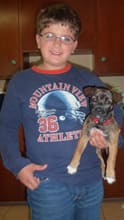Nine-year-old son Joseph Wilcken is heartbroken over his puppy, Ash, running away, Joseph's dad says.