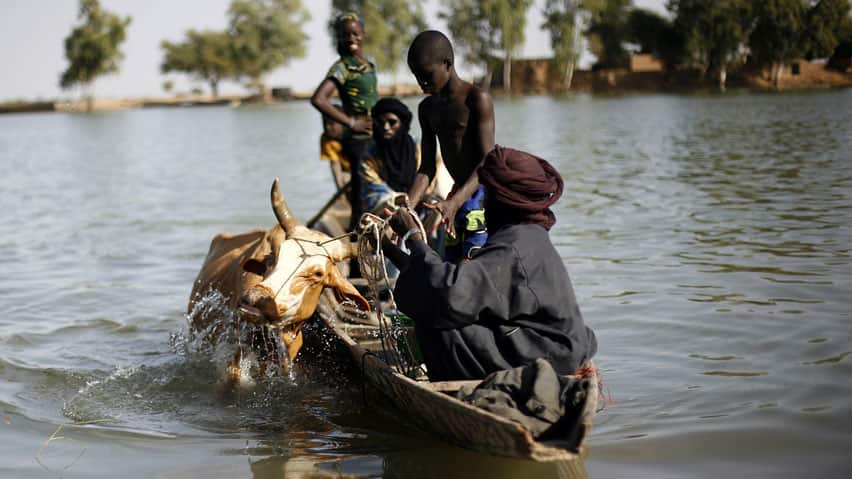 Malians bring a cow across the Niger river at Korioume Port, south of Timbuktu, Mali, on Sunday. French troops launched airstrikes on Islamic militant training camps near the Algerian border for the second night in a row.