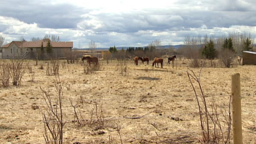 CBC News: Calgary at 6:00 - Forgotten Farm
