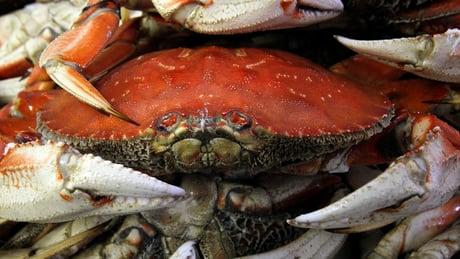 Crab closure frustrates North Coast fishermen