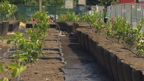 Vancouver home to largest urban orchard in North America
