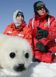 Paul McCartney and his wife Heather with a harp seal pup on a Canadian ice floes