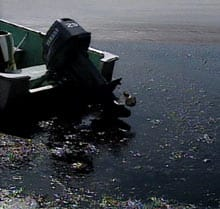 Province orders cleanup of Alberta oil spill - Canada - CBC News