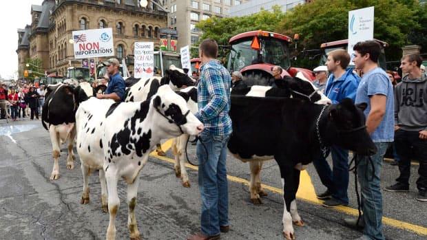 TPP allows milk from cows receiving hormones into Canada