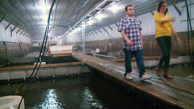Pig farm converts from swine to shrimp