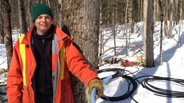 News - Maple tree tapping on crown land