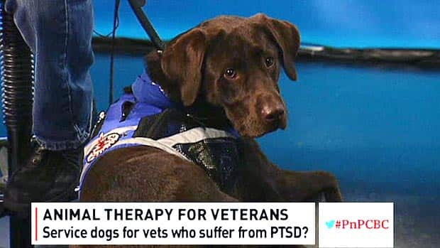 Politics - Animal therapy for vets