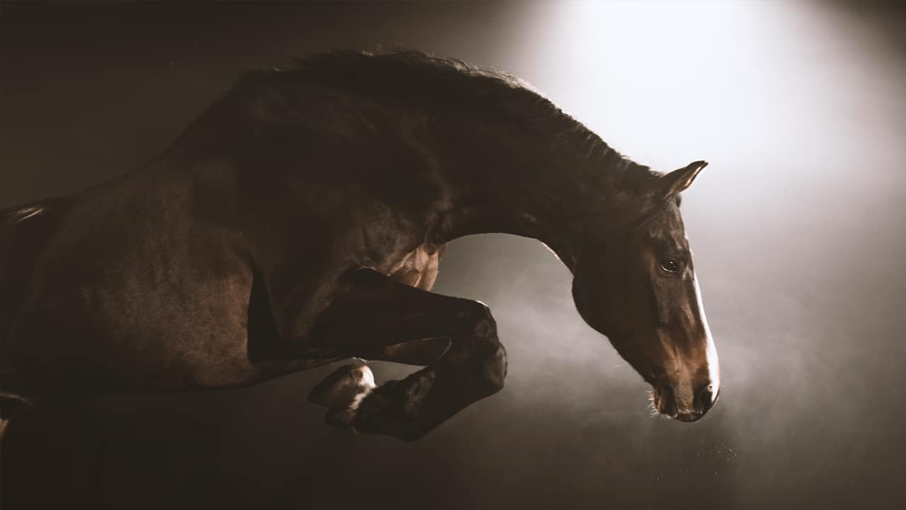Heartland Star Amber Marshall reviews CBC's new doc, Equus: Story of the Horse