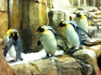 penguin IMG_3349.JPG