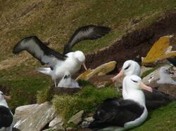 albatrossbk.jpg