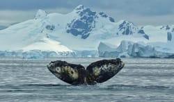 whalefin.jpg