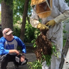 Bee swarm capture June 22, 2014.JPG