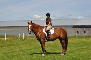 pony up.JPG