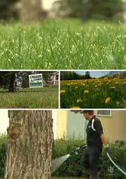 LawnPesticides.jpg
