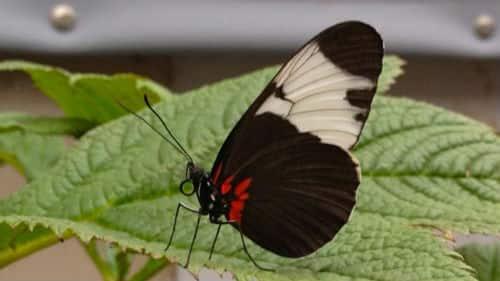 butterflyhouse.jpg