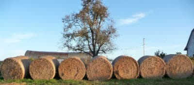 farm3 web.jpg