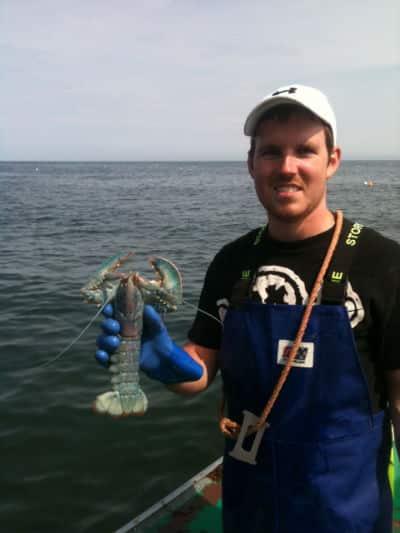 logan blue lobster.jpg
