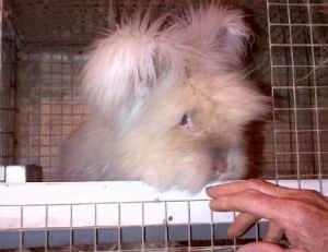 rabbittimmcgraw web.jpg