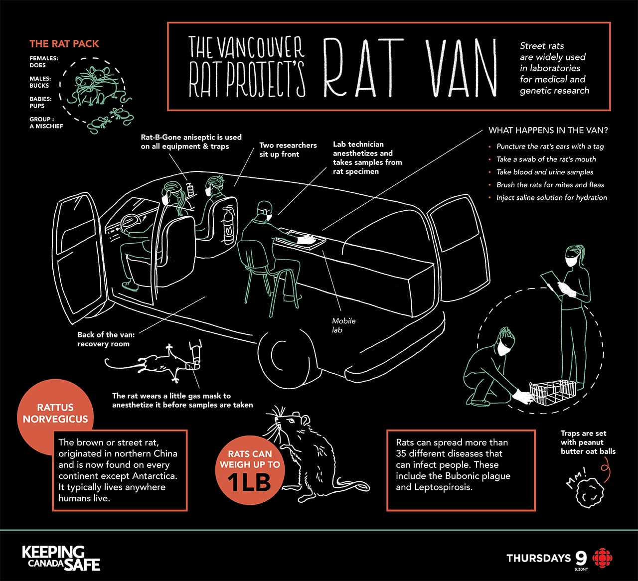 Vancouver Rat Project infographic