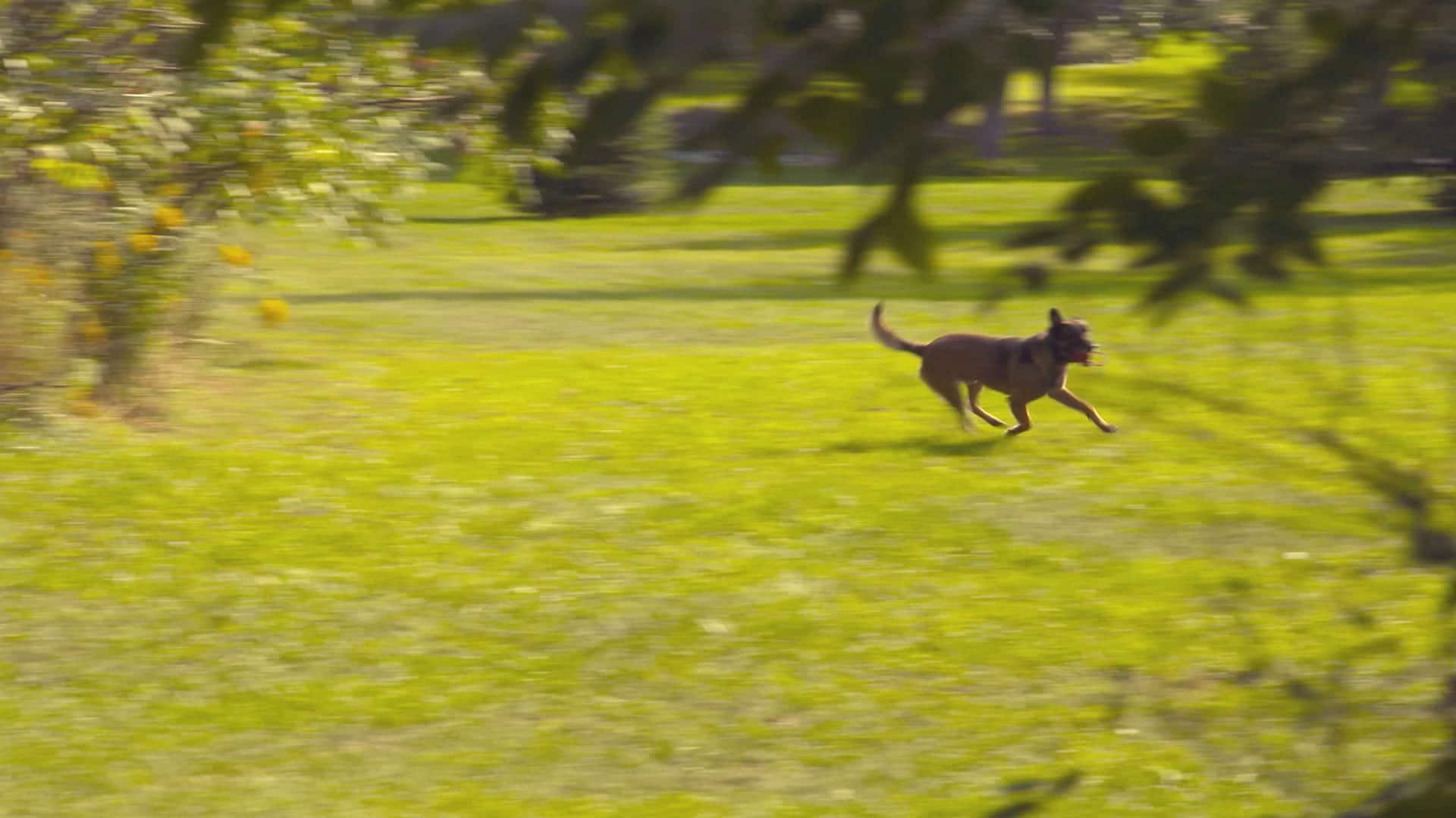 Niagara's Canine cops