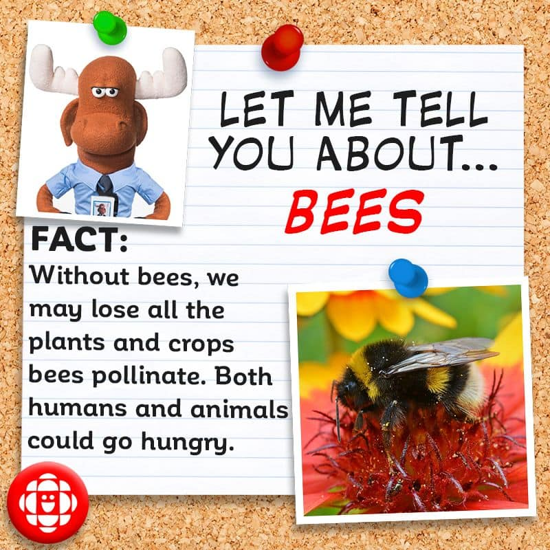 We'd be lost (or at least hungry) without bees.