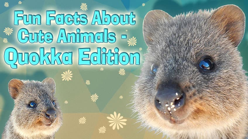 Fun Facts About Cute Animals Quokka Edition Explore Awesome Activities Fun Facts Cbc Kids