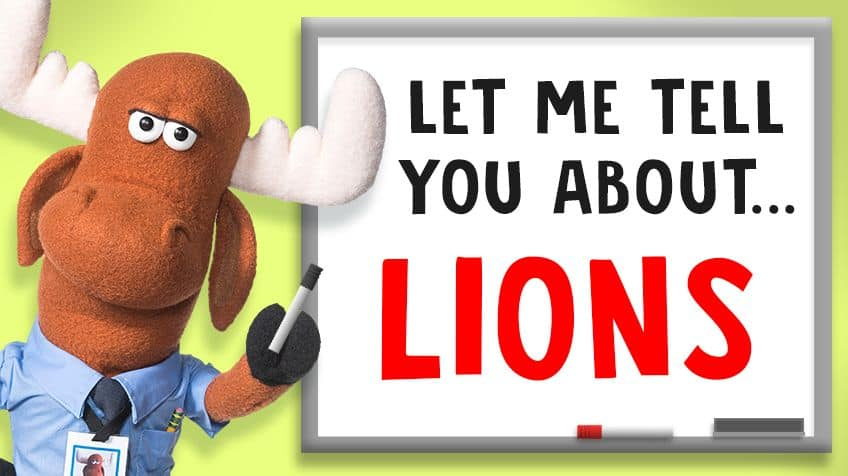 5 fun facts about lions | Explore | Awesome Activities & Fun