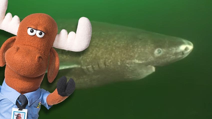6 facts about the longest-living, slow-swimming Greenland shark