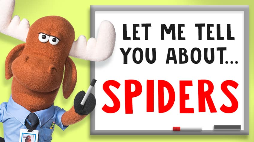 5 fun facts about spiders | Explore | Awesome Activities