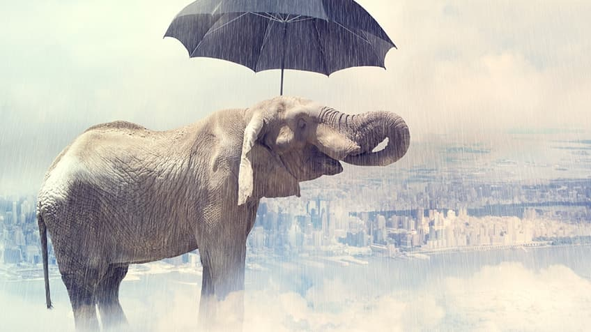 8 animals that give the weather report | Explore | Awesome