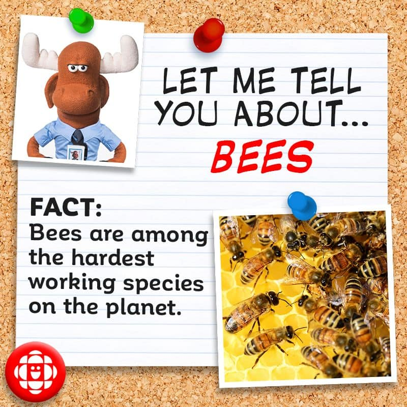 Bees are among the hardest working species on the planet.