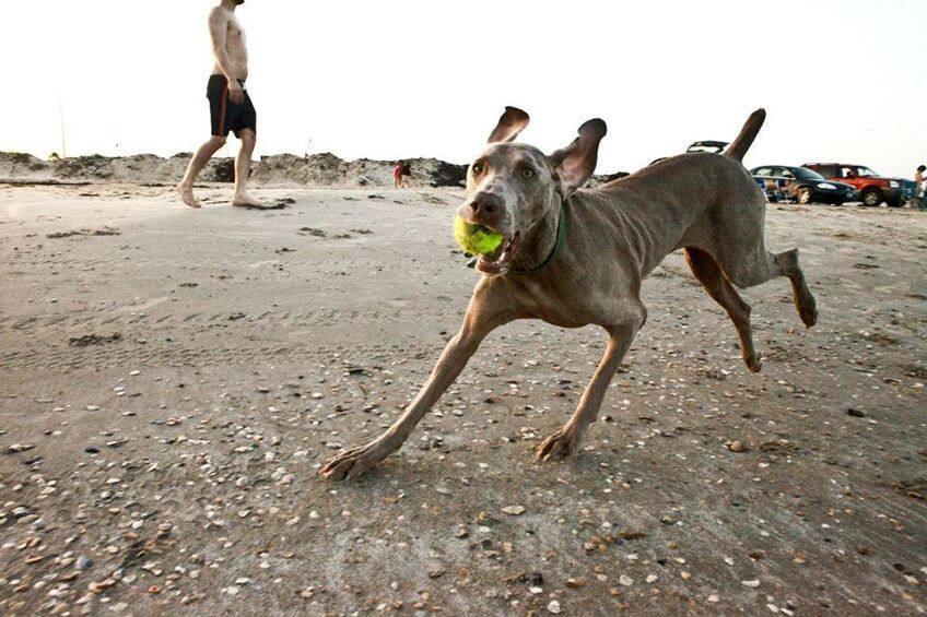 a dog catches a tennis ball thrown to him by his human friend