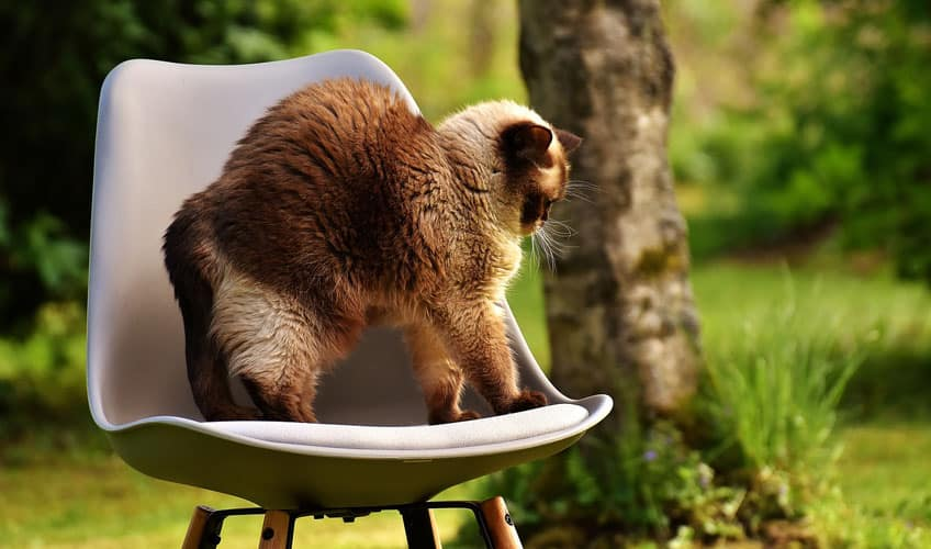A cat on a chair stretching its back out