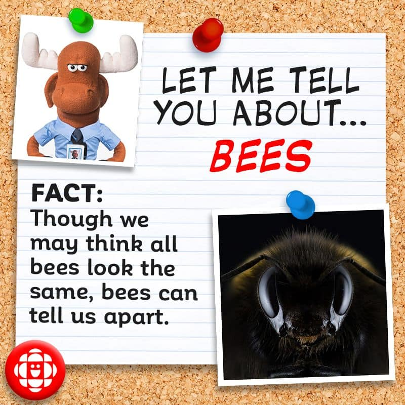 Though we may think all bees look the same, bees can tell us apart.