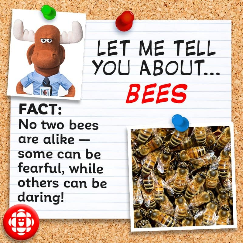 No two bees are alike — some can be fearful while others can be daring.