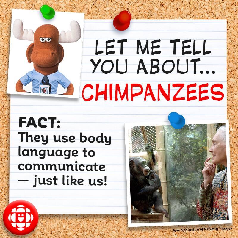 They use body language to communicate — just like us!